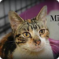 Adopt A Pet :: Mila - Glen Mills, PA
