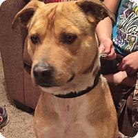 Adopt A Pet :: Mr. Mayhem - Manhattan, KS