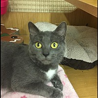 Adopt A Pet :: Kamara - Northfield, OH