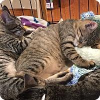 Adopt A Pet :: Paris & Pierre - Horsham, PA