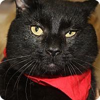 Adopt A Pet :: SANTANA - Clayton, NJ