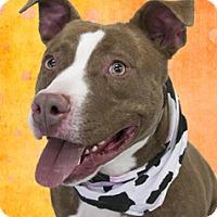 Adopt A Pet :: Benny - Cincinnati, OH