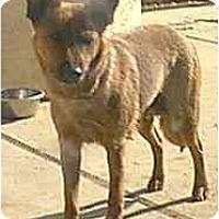 Adopt A Pet :: Ellie - dewey, AZ