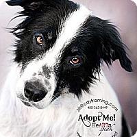 Adopt A Pet :: DANDY - Phoenix, AZ