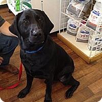 Adopt A Pet :: Hootie - Cumming, GA
