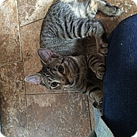 Adopt A Pet :: Stacy&Ariel - Clay, NY