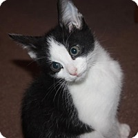 Adopt A Pet :: Charming (LE) - Little Falls, NJ