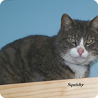 Adopt A Pet :: Squishy - Dover, OH