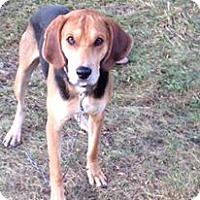 Adopt A Pet :: Billy Bob - Caledon, ON