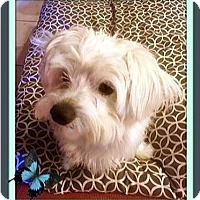 Adopt A Pet :: Clancy - Rancho Cucamonga, CA