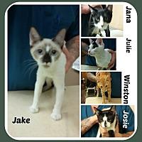 Adopt A Pet :: KTTENS - 3 fem/2 males - Malvern, AR