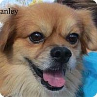 Adopt A Pet :: Stanley - Warren, PA
