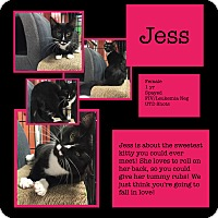 Adopt A Pet :: Jess - CLEVELAND, OH