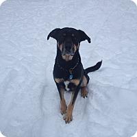 Adopt A Pet :: Rowdy - Roslyn, WA