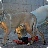 Adopt A Pet :: Teegan - Yakima, WA