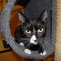 Adopt A Pet :: Heidi - Whittier, CA