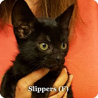 Adopt A Pet :: Slippers - Bentonville, AR