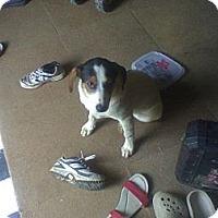 Adopt A Pet :: Snuggies - Allentown, PA