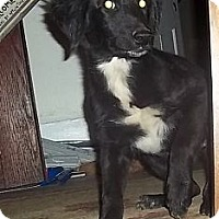 Adopt A Pet :: Janie - Spring Valley, NY