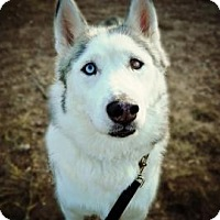 Adopt A Pet :: Governor - Cheyenne, WY