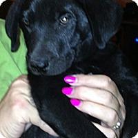 Adopt A Pet :: Olaf - Phoenix, AZ