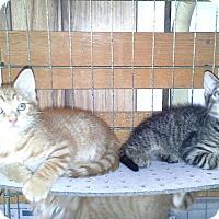 Adopt A Pet :: Munch - Ft. Lauderdale, FL