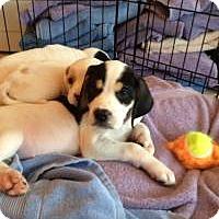 Adopt A Pet :: Batman - Marlton, NJ