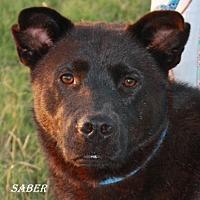 Adopt A Pet :: Saber - Lone Oak, TX