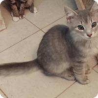 Adopt A Pet :: KC - Cocoa, FL
