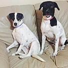 Adopt A Pet :: Marco & Polo