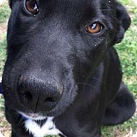 Adopt A Pet :: Buffy - Morehead, KY