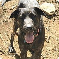Dutch Shepherd Mix Dog for adoption in Alpharetta, Georgia - Miren