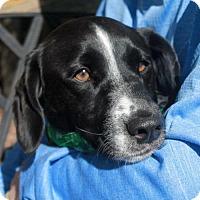 Adopt A Pet :: Cooper - Garfield Heights, OH