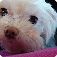 Adopt A Pet :: Charlotte - Battle Ground, WA