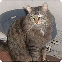 Adopt A Pet :: Rascal - Bedford, MA