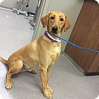 Adopt A Pet :: Ralph - Cumming, GA