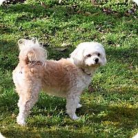 Adopt A Pet :: Blanca - Hazard, KY