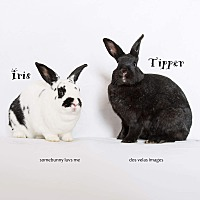 Other/Unknown Mix for adoption in Jurupa Valley, California - Iris and Tipper
