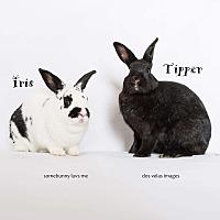 Adopt A Pet :: Iris and Tipper - Jurupa Valley, CA