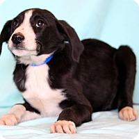 Adopt A Pet :: Manuel - Waldorf, MD