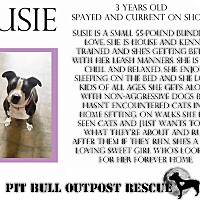 American Staffordshire Terrier Mix Dog for adoption in Lafayette, Oregon - Susie