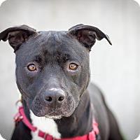 Adopt A Pet :: Raven - Berkeley, CA