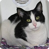 Adopt A Pet :: Liza - New Kensington, PA