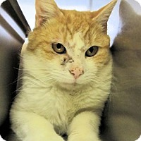Adopt A Pet :: Abraham - Lunenburg, MA