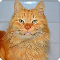 Adopt A Pet :: Mr Bean - Buford, GA