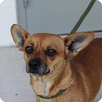 Adopt A Pet :: Cindy - Beacon, NY