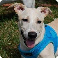 Adopt A Pet :: Missy - Brooklyn, NY