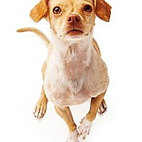 Adopt A Pet :: Peanut