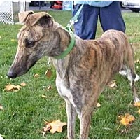 Adopt A Pet :: Dave - Fremont, OH