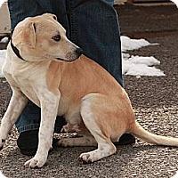 Adopt A Pet :: Sprint (CD) - Brattleboro, VT